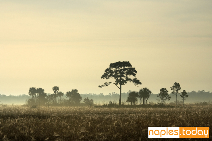 A foggy morning in Big Cypress National Preserve