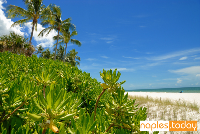 Beautiful untouched beaches in Naples