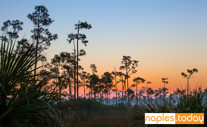 Colorful sunrise over the Florida Everglades