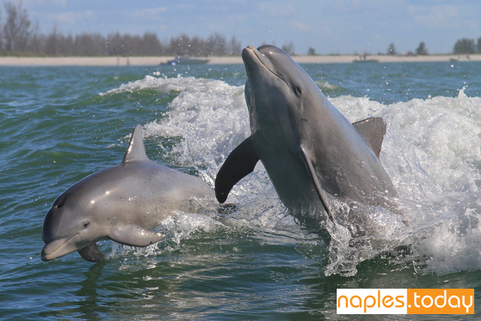 Dolphins having fun with waves
