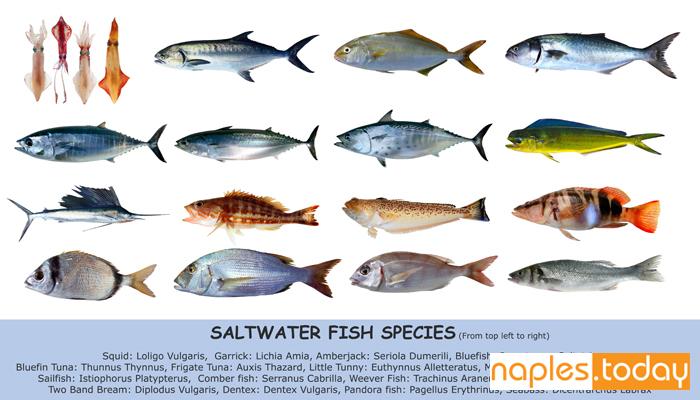 Fish species saltwater index