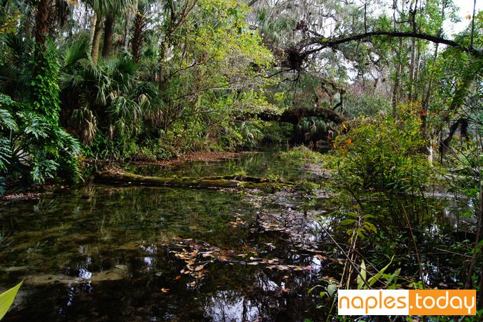 Florida Everglades waterway through forest