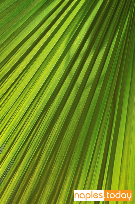 Fresh green leaf of palm tree