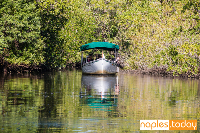 Guided boat tour through the mangroves