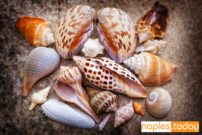 Seashell collection on Naples beach