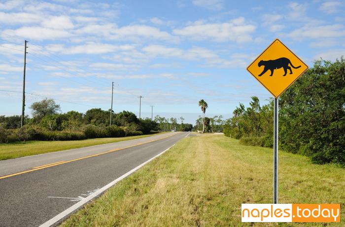 Sign warning of Florida panther habitat
