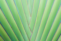 A close up of tropical palm tree