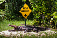 Alligator warning sign in Florida Everglades