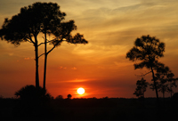 Beautiful Everglades sunset