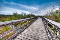 Boardwalk inside the Everglades