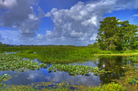 Cloudscape landscape in Everglades National Park