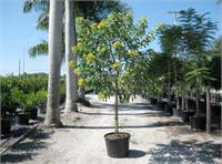 Davenport's Nusery in Naples