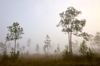 Early morning fog Florida Everglades