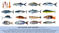 Fish species saltwater index