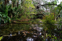 Florida Everglades waterway through forest