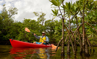 Red kayak in the mangroves