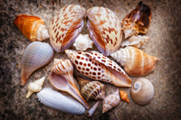 Seashell collection on Naples beach